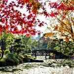 源氏物語ゆかりの地で紅葉を満喫!京都駅から徒歩圏内「東本願寺 渉成園(しょうせいえん)」