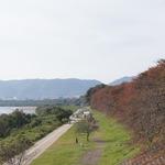秋は赤く色付いた桜が楽しめます!のんびり散歩にオススメな「八幡の背割提」