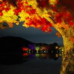 大覚寺が紡ぐ幻想的な世界!夜間特別拝観「真紅の水鏡」12/4まで開催中
