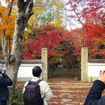 「インスタグラマーと行く紅葉撮影ツアー@浄住寺」で知った素敵なお寺の風景【イベント】