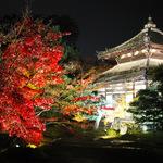 見事な借景庭園に紅葉!お茶菓子とともに静寂なひとときを「鹿王院・夜間特別拝観」【12/10まで】
