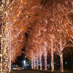 クリスマスまで待てない!冬の夜をキラキラに飾る京都のイルミネーション2019