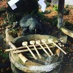 【京都名水めぐり】お酒の神様・松尾大社の名水!日本酒の仕込水にも使われる霊泉「亀の井」