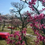春到来!梅小路公園で【梅のお花見】はいかが?3月5日までの開催!