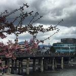【京都橋めぐり】東海道五十三次の西の起点!さまざまな歴史を渡ってきた橋!!「三条大橋」