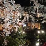 【京都ニュース】今年は中止決定!残念!!27年続いた祗園白川春の名物☆夜桜ライトアップ