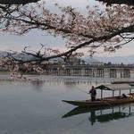 【京都の桜】見頃を迎えた「嵐山」の桜!渡月橋と桜の景色がお見事!