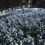 シャガにスイセンに・・GWは綾部で季節の花を楽しもう【まとめ】
