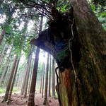 【あやべ水源の里 老富】シャガの群生地は神秘の森だった☆