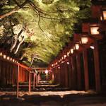 初夏の艶やかに光り輝く特別なひととき!「貴船神社の新緑ライトアップ」