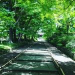 【京都山科】新発見!紅葉絶景スポットは新緑の青もみじの名所でもあり☆「毘沙門堂」