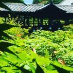 京都随一の紅葉スポットは新緑も天下一品!青もみじの海に浮かぶ通天橋必見☆「東福寺」