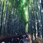 【京都嵐山】世界にとどろく京都随一の観光スポット!初夏の嵐山は竹林清涼シャワーが心地いい☆