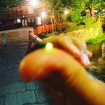【祇園巽橋】今年も発見!京都の風情あふれる祇園白川で乱舞するホタル☆【初夏の風物詩】
