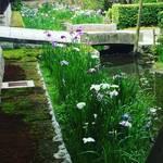 【京都季節の花】花菖蒲がそろそろ見ごろ!無料で見れます!!南禅寺界隈の数寄屋造りの別邸「野村碧雲荘」