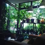 【京都カフェ】鬱蒼とした緑の奥にはさらに苔リウムの緑!時間を忘れる癒やしオーガニックランチ☆「モール」【京都市役所スグ】