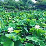【京都夏の花】嵯峨嵐山の名所・世界遺産天龍寺の境内に咲くちょうど見頃の花々を集めてみました!