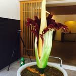 世界最大級の花が24年の時を経て初開花!今だけ特別公開☆「京都薬用植物園」【一乗寺】