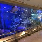 親子で楽しめるコンパクトな水族館!日本最大級のタッチングプールあり!「丹後魚っ知館(うおっちかん)」