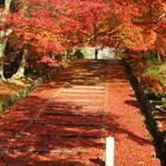 【2017最新】京都紅葉情報!モミジの赤絨毯にはまだ早し!!『そうだ京都、いこう』のポスターにもなった「山科毘沙門堂」