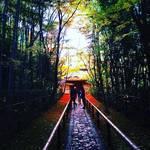 【2017最新】リアルな京都紅葉情報!絶景の人気スポットの今シーズンは?大徳寺「高桐院」