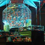金魚が織りなす絢爛豪華な水槽アート!二条城で開催「アートアクアリウム城 ~京都・金魚の舞~」