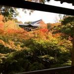【2017京都紅葉最新】大本命の絶景スポット!紅葉グラデーション始まってます!!激混み前にチェック☆「東福寺」