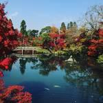 行ってみたい全国紅葉ランキング1位に選ばれた京都屈指の名所「永観堂」