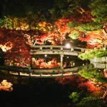 名所の多い京都でも圧倒的な美しさ「もみじの永観堂(禅林寺)」の紅葉ライトアップ!