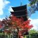 【2017京都紅葉最新】紅葉の見ごろピーク!広大な敷地に圧巻の五重塔!!世界遺産「仁和寺」