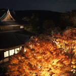 京の都始まりの地「将軍塚青龍殿」から夜空に光る紅葉と京の町を望む