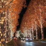 京都市内最大級の光の輝き!並木道は圧巻の美しさ「ロームイルミネーション2017」【冬の風物詩】