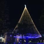 【2017京都イルミネーション特集】国内2番目の高さを誇るヒマラヤスギのクリスマスツリー!「同志社大今出川キャンパス」