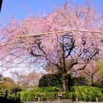 春を満喫!妙心寺退蔵院 お食事付き「観桜会」