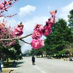 【京都の花前線】梅林がまさに見頃!行楽弁当持参で鑑賞できる市民憩いの場☆「京都御苑」
