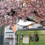 早咲き桜と風情ある駅舎、電車との共演!JR桃山駅の桜が美しい!