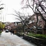 【2018直近桜情報】京都らしい情緒あふれる人気桜スポットをパトロール☆「祇園白川」