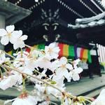 【2018京都桜情報】開花進行早め!ビジネス街に咲くオアシス的存在の桜「六角堂(頂法寺)」