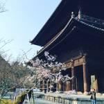 【2018京都桜情報】朝活・座禅会からの桜パトロール!見頃はもう少し先☆「南禅寺」