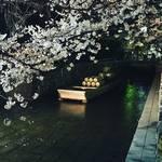 【2018京都桜情報】桜並木はすでに満開!飲食ついでに街中で楽しめる夜桜スポット☆「高瀬川」