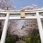 桜のトンネルと逆立ちの狛犬がお迎え!「宗忠神社(むねただじんじゃ)」