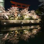 【京都の風物詩】琵琶湖疏水に映り込む桜がステキ!「岡崎桜回廊ライトアップ」