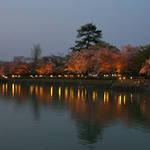 長岡天満宮で夜桜を楽しむ!八条ヶ池で「桜ライトアップ」開催!