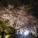紅枝垂れ桜は必見の美|「妙心寺 退蔵院(たいぞういん)」期間限定で特別な花見会も開催!