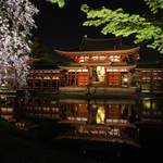 桜舞い、闇夜に浮かぶ鳳凰堂|世界遺産・平等院【ライトアップ】