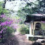 【京都世界遺産】桜が散ったらコチラ!ハイキング感覚で京都版お遍路参拝☆仁和寺「御室八十八ヶ所霊場」