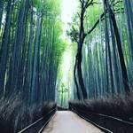 【京都嵐山】世界にとどろく京都随一の観光スポットをぶらり!早朝の竹林トンネルは癒し空間☆