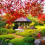 毎年大人気!「妙心寺退蔵院」秋のお食事付き特別拝観はいかがですか?