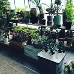 京都 二条城スグの緑のオアシス!多肉植物・サボテンの癒され空間☆観葉植物・アンティーク雑貨店「コトハ」