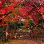 【京都紅葉特集】知る人ぞ知る紅葉の名所|洛西エリアの穴場「浄住寺」
